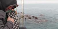 Стая моржей заслушалась аккордеон: забавное видео покорило Сеть