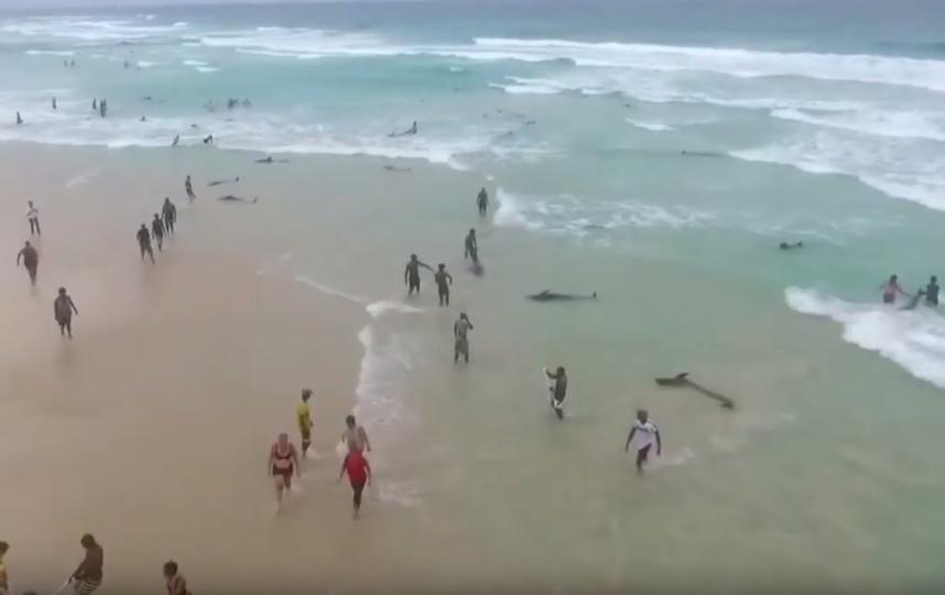 Местные жители совместно с туристами пытались затащить животных обратно в море. Фото Скриншот https://www.youtube.com/watch?v=EAUGCsWF90M, Скриншот Youtube