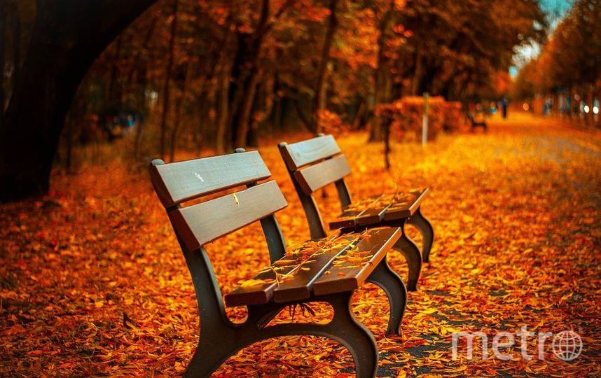 """Или просто погуляйте в парке. Фото https://pixabay.com, """"Metro"""""""