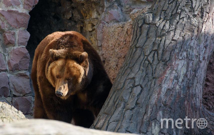Зоопарк. Фото Василий Кузьмичёнок