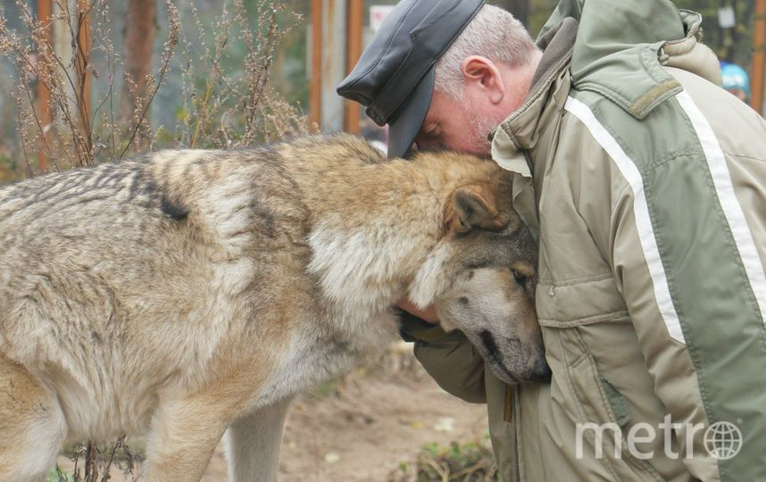 Дмитрий Васильев и волчица Тень.. Фото Ленинградский зоопарк /vk.com/spbzoopark, vk.com