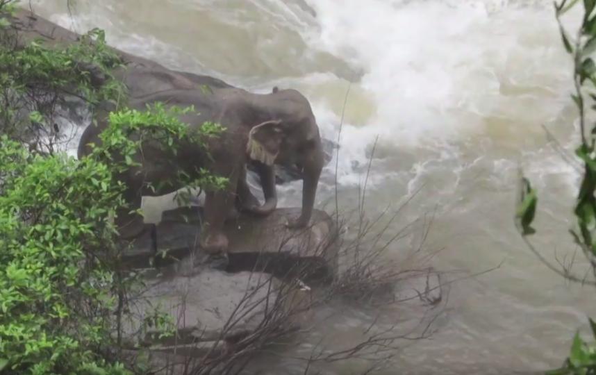Из всего стада выжило только два слона. Фото скриншот https://www.youtube.com/watch?v=i06t6KVTw2o, Скриншот Youtube