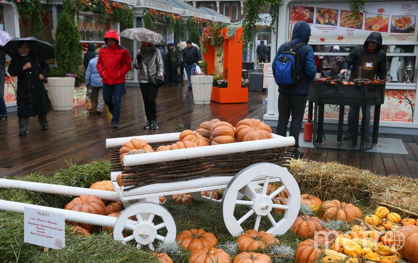Центр Москвы заполнили тракторы и тыквы. Фото Василий Кузьмичёнок