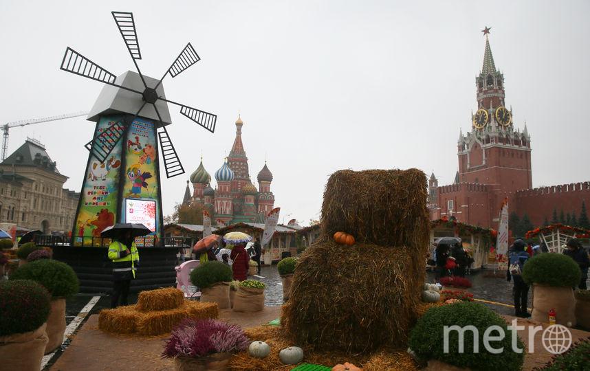 Красная площадь превратилась в живописный сельский пейзаж. Фото Василий Кузьмичёнок