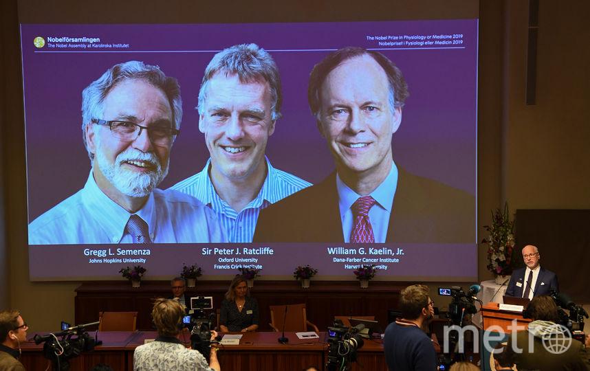 Грэгг Семенце, Питер Рэтклифф и Уильям Кейлин стали лауреатами Нобелевской премии-2019 в области физиологии и медицины. Фото AFP