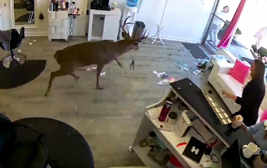 В Нью-Йорке олень ворвался в парикмахерскую, разбив витрину. Фото скриншот, Скриншот Youtube