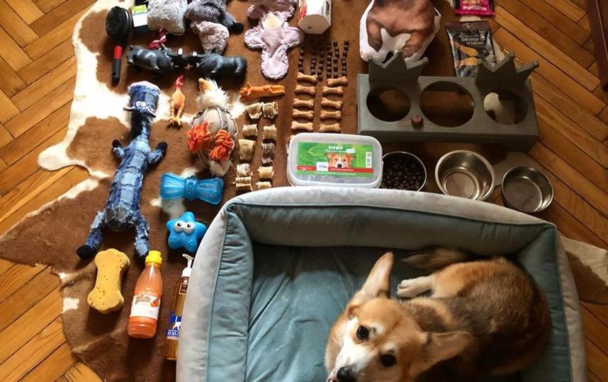Малыш корги из Москвы аккуратно разложил на полу всё своё пёсье имущество. Фото скриншот instagram @polkan4ik