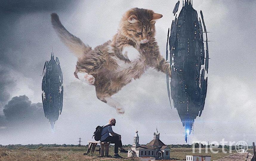 """Космические пришельцы не испугали кота и Андрея. Фото Скриншот Instagram/odnoboko, """"Metro"""""""