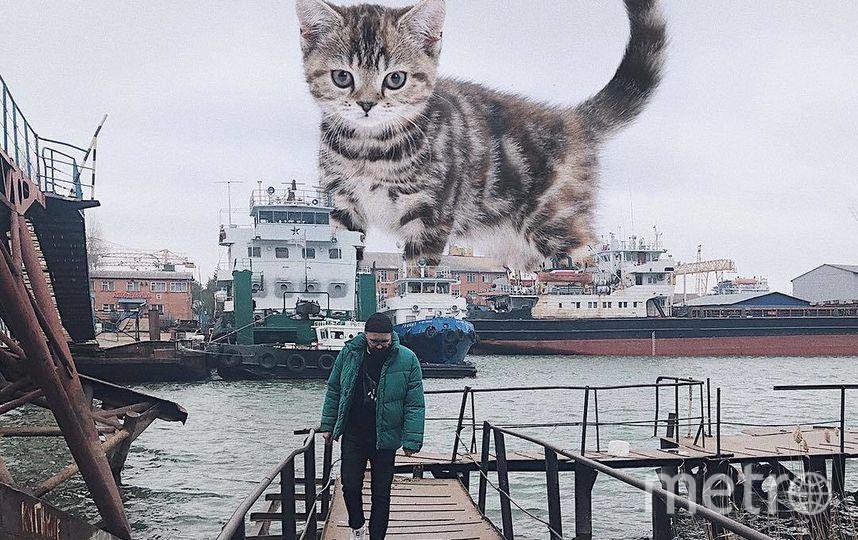 """Дружелюбный пушистик встречает Андрея на причале. Фото Скриншот Instagram/odnoboko, """"Metro"""""""