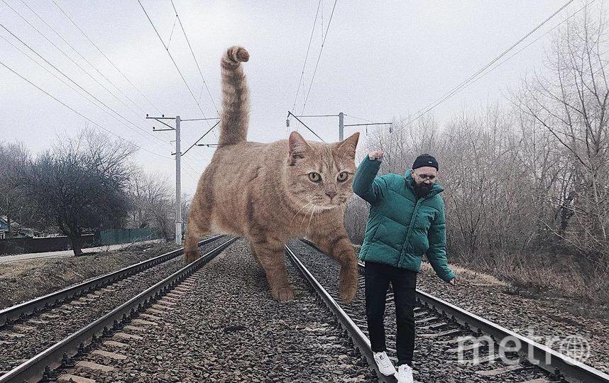 """Когда за тобой на рельсах увязался гигантский кот... Фото Скриншот Instagram/odnoboko, """"Metro"""""""