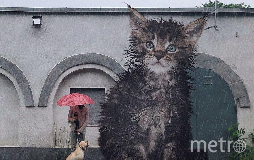 "Коту яво не хватает зонтика. Фото Скриншот Instagram/odnoboko, ""Metro"""