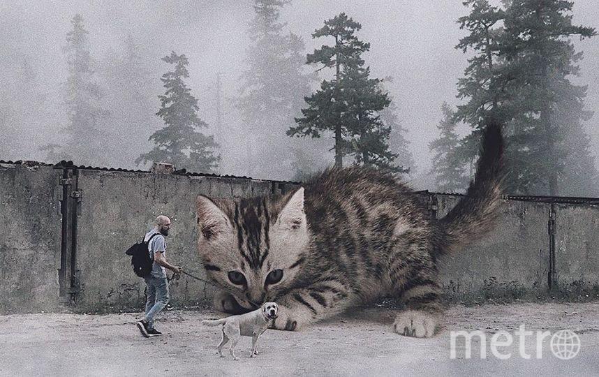 """Большой кот и маленькая собака. Фото Скриншот Instagram/odnoboko, """"Metro"""""""