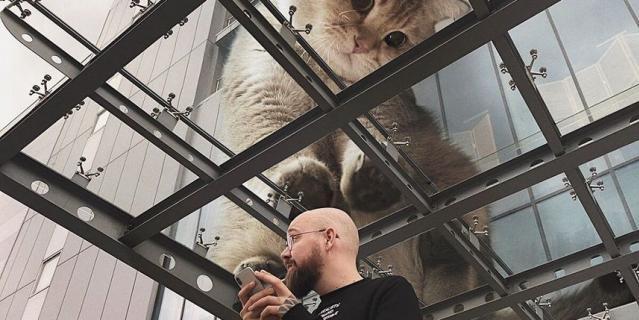 Кот рассматривает человека через стекло.