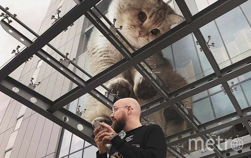 """Кот рассматривает человека через стекло. Фото Скриншот Instagram/odnoboko, """"Metro"""""""