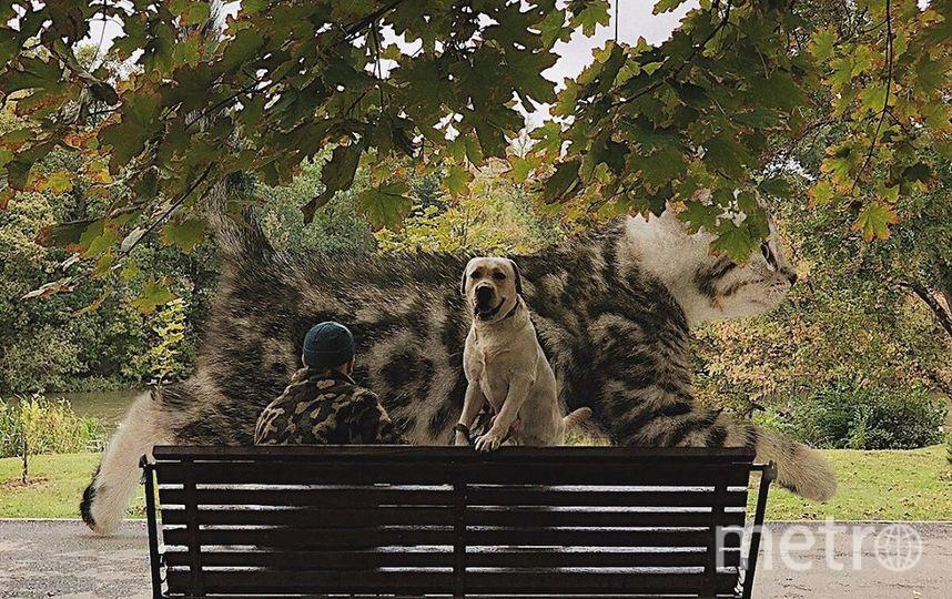 """В парке, бывает, тоже гигантские коты попадаются. Фото Скриншот Instagram/odnoboko, """"Metro"""""""