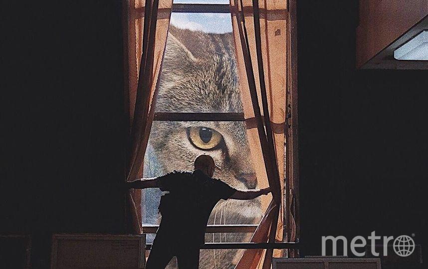 """Кот всегда следит за Андреем. Фото Скриншот Instagram/odnoboko, """"Metro"""""""