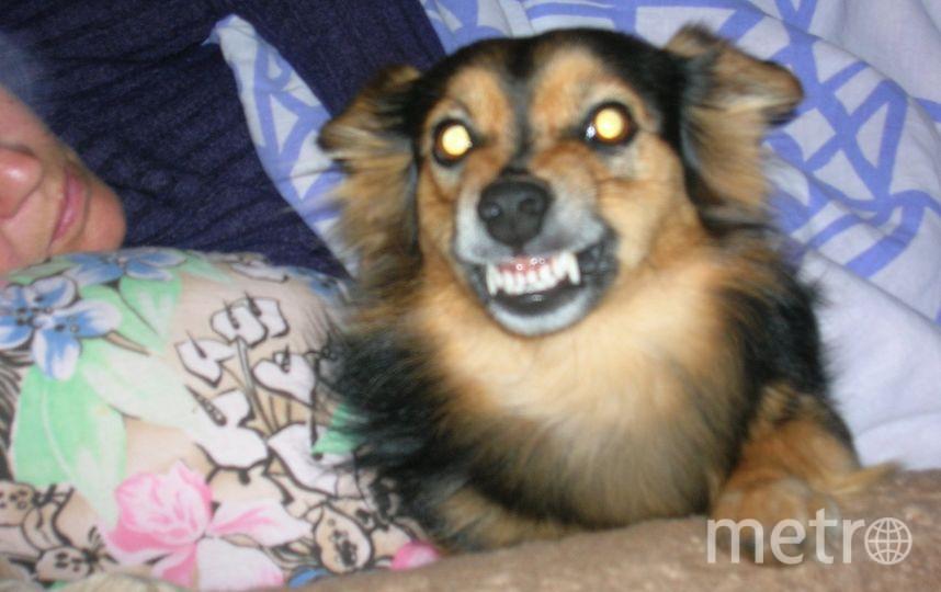 "Обладательница голливудской улыбки Лайма. Фото Анастасия, ""Metro"""