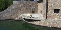 Белая медведица показала забавный трюк в Ленинградском зоопарке: видео