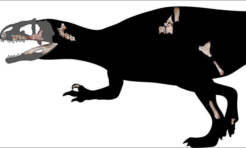 Новый вид назвали Siamraptor suwati. Фото Chokchaloemwong et al 2019