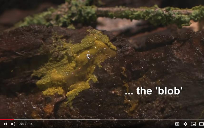 Этот загадочный организм назвали капля. Фото https://www.youtube.com/watch?v=fm1uhyMoO_w, Скриншот Youtube