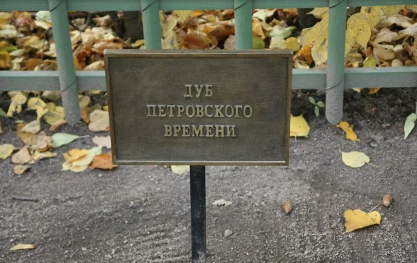 """""""День рождения дуба"""". Фото Пресс-служба ГРМ, Предоставлено организаторами"""