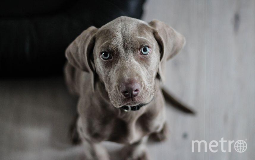 Собака. Фото Pixabay
