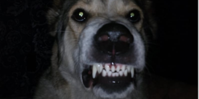 """""""Это моя собака Кассандра. Очень добрая и ласковая, но злится, когда выгоняют с кровати""""."""