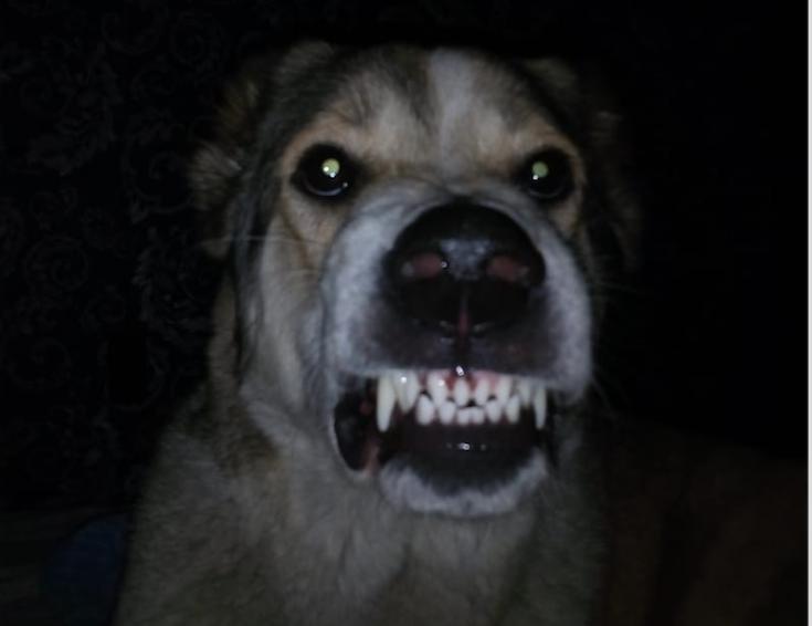 """""""Это моя собака Кассандра. Очень добрая и ласковая, но злится, когда выгоняют с кровати"""". Фото Мария, """"Metro"""""""