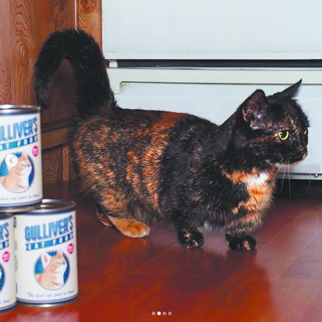 """""""Приземлённая"""" кошка. Фото Скриншот instagram/guinnessworldrecords"""
