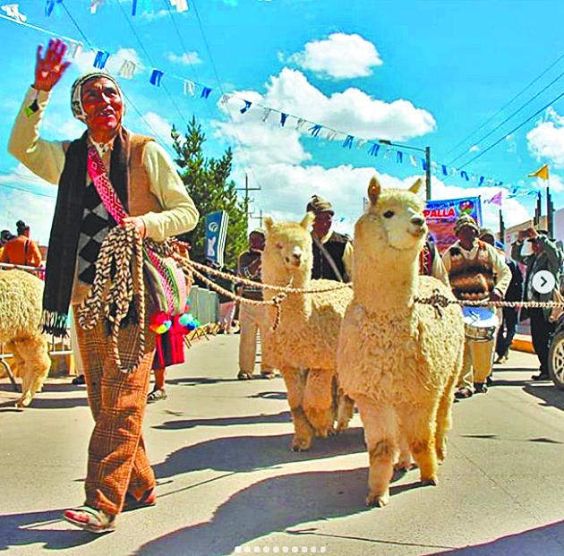 Альпаки и их парад. Фото Скриншот instagram/guinnessworldrecords