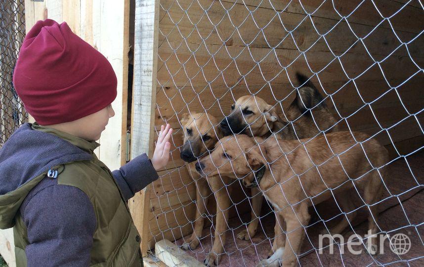 """Паша полюбил собак, когда стал навещать их в приюте. Фото предоставила Екатерина Большакова, """"Metro"""""""