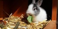 После жестокой расправы над декоративным кроликом в Петербурге возбудили дело