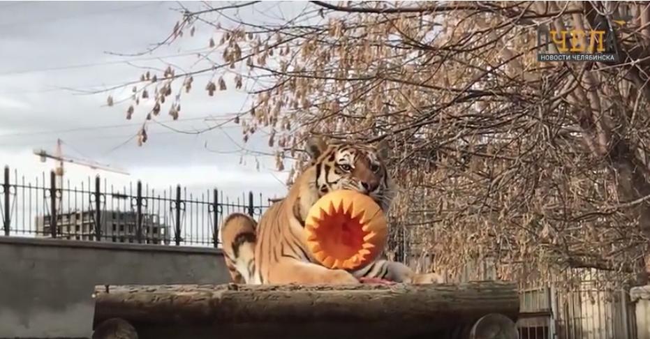 Видео Хэллоуина в зоопарке. Фото Скриншот Youtube/watch?v=jp_K91CZPl8