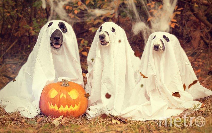 Хэллоуин (канун Дня всех святых) празднуется с 31 октября на 1 ноября в англоязычных странах. Фото Pixabay