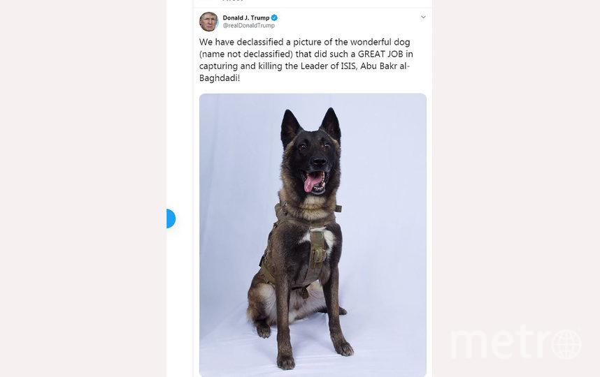 """В Сети продолжают активно обсуждать пост Дональда Трампа в Twitter, который написал, что при ликвидации главаря террористической организации """"Исламское государство"""" (запрещена в России) ключевую роль сыграла служебная собака. Фото AFP"""