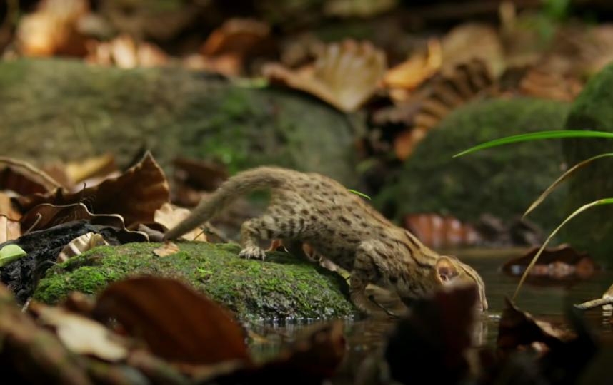 Питается животное в основном ящерицами и мышами. Фото скриншот: youtube.com/watch?v=W86cTIoMv2U