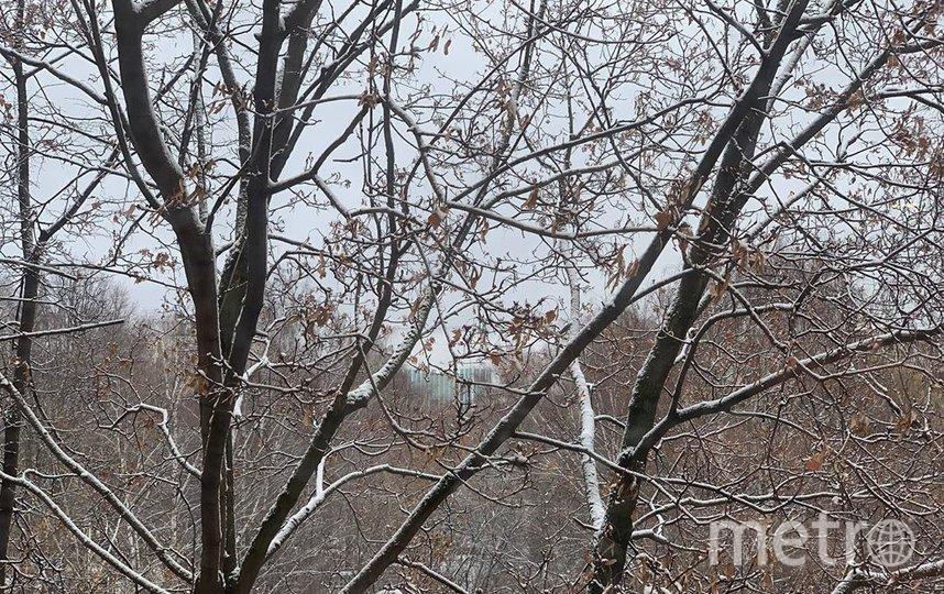 """Вид на снег в Медведково. Фото Скриншот Instagram/anetteua, """"Metro"""""""