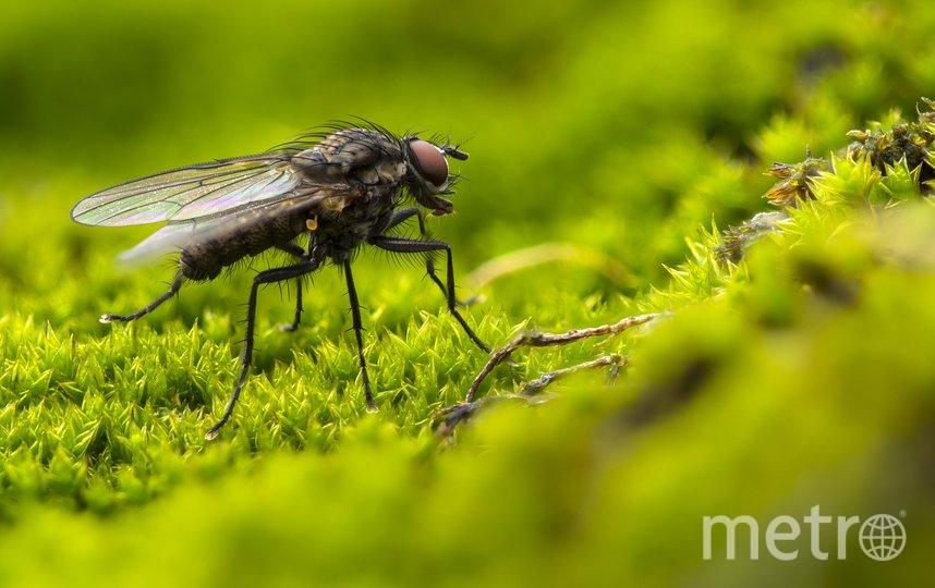 Москвичи посреди осени скупили средства от комаров и мух. Фото pixabay