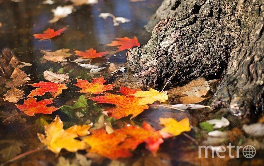 Россиян предупредили об опасности теплого ноября. Фото pixabay.com