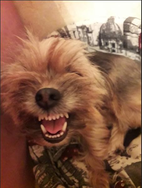 """Жозефина Михайловна тоже претендует на звание """"собаки Баскервилей"""". Страшно? Фото Наталья, """"Metro"""""""