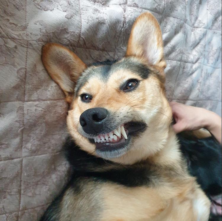 """""""Прошлой зимой эта собака прыгнула ко мне в машину (за городом). Не знаю, откуда она взялась. Так и осталась у меня. Назвала Линдой, ей уже 2 года"""". Фото Евгения, """"Metro"""""""