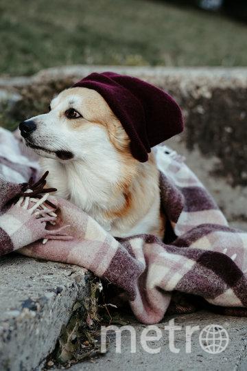 Умнейший пёс Тор. Фото Instagram/Thor_the_corgi/предоставила Екатерина Ясакова
