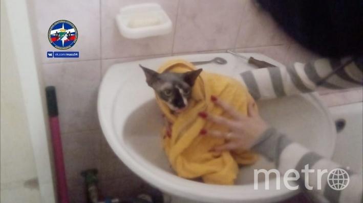 Кот забрался в раковину и зацепился лапой за сливное отверстие. Фото МАСС