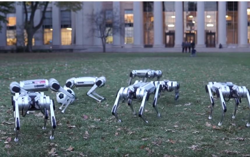"""Девять роботов-собак устроили тренировку. Фото скриншот Youtube, """"Metro"""""""