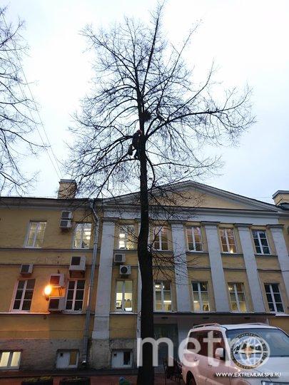 """Фото: Кошкиспас / ПСО """"Экстремум"""". Фото vk.com"""