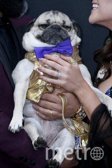 """Победу в номинации """"Лучший питомец года"""" на церемонии премии People's Choice Awards одержал мопс Даг. Фото Getty"""