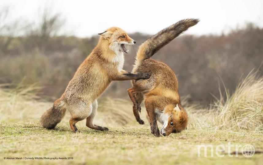 """Также организаторы отметили 12 фотографий, получивших высокую оценку. """"Что-то пошло не по плану"""". Фото Alastair Marsh / Comedy Wildlife Photography Awards"""