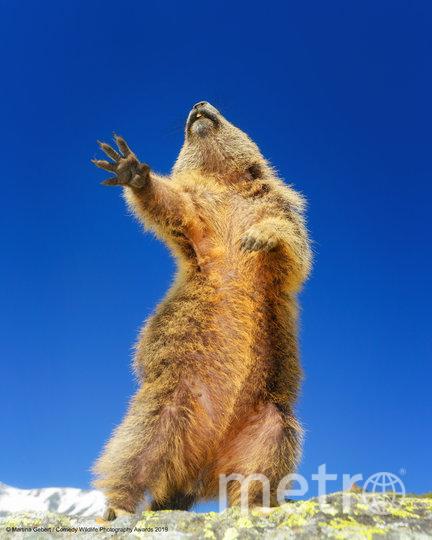 """Также организаторы отметили 12 фотографий, получивших высокую оценку. """"Танцы, о да!"""" Фото Martina Gebert / Comedy Wildlife Photography Awards"""