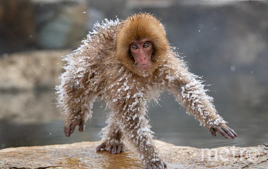 """Также организаторы отметили 12 фотографий, получивших высокую оценку. """"Космонавт"""". Фото Roie Galitz / Comedy Wildlife Photography Awards"""