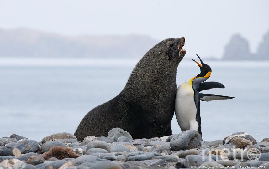 """Также организаторы отметили 12 фотографий, получивших высокую оценку. """"Дай пять!"""". Фото Thomas Mangelsen / Comedy Wildlife Photography Awards"""